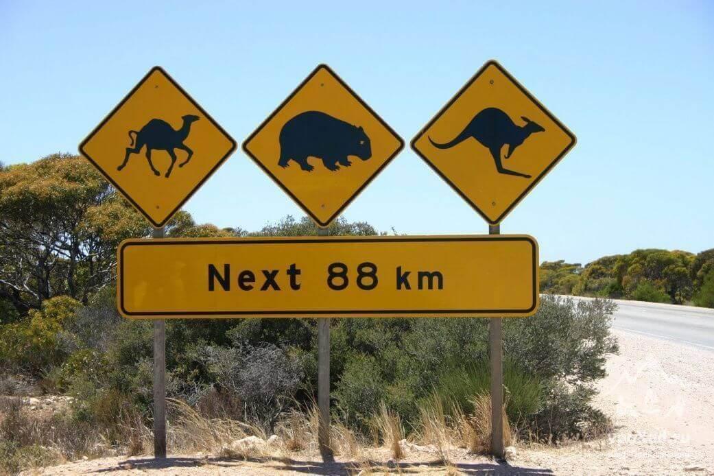 Картинка дорожные знаки