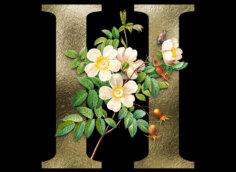 Картинка золотистая аватарка буква н с белыми цветами и зелёными лепестками на чёрном фоне