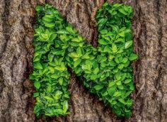 Картинка аватарка с буквой n из зелёных листьев плюща на стволе дерева