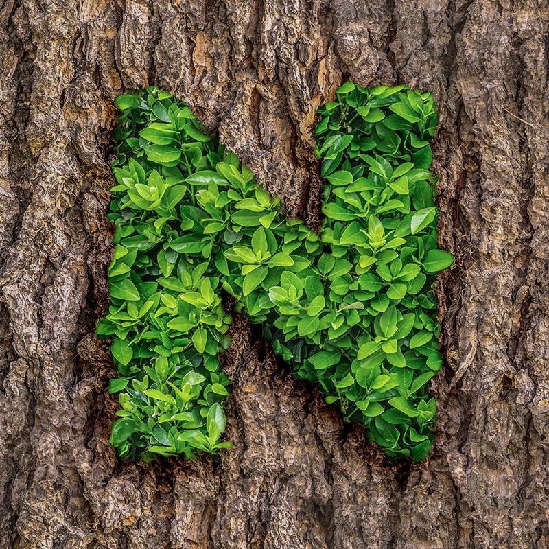 Аватарка с буквой n из зелёных листьев плюща на стволе дерева