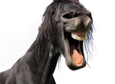 Прикольное фото голова и шея ржущей гнедой лошади.