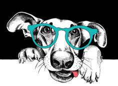 Морда собаки с высунутым языком в зелёных очках на чёрно белом фоне.