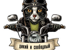 Аватарка с котом в чёрной куртке, шлеме и защитных очках на мотоцикле.