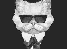 Картинка аватарка для скайпа для парней с мордой белого кота в солнечных очках, костюме и галстуке на чёрном фоне.