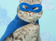 Прикольное фото кота в синей маске и плаще супергероя.