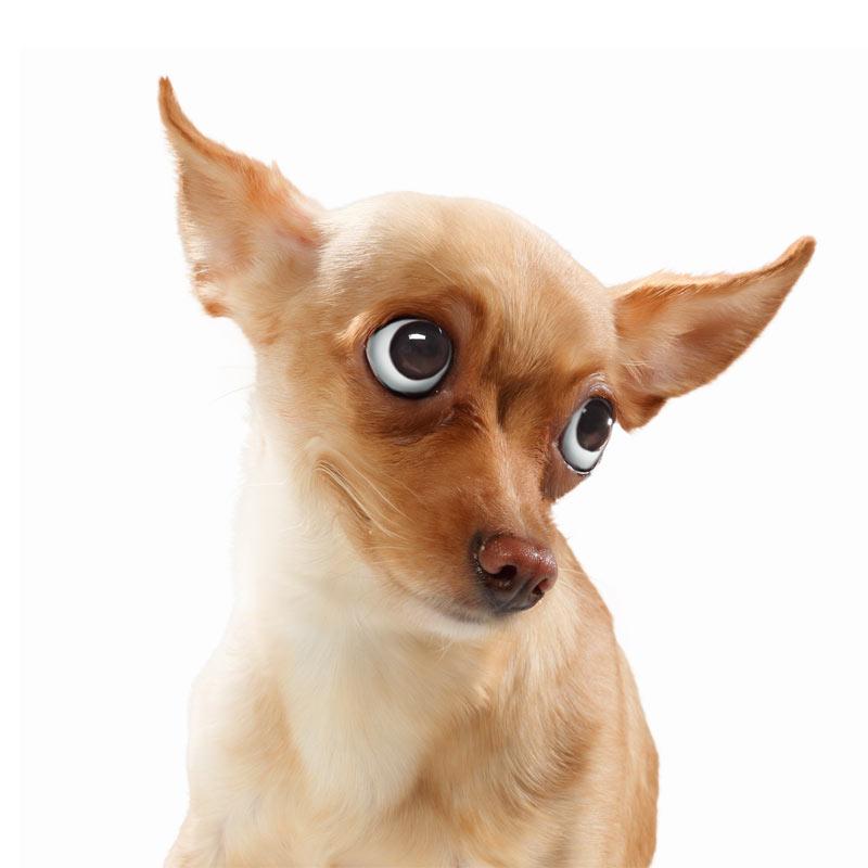 Прикольное фото с маленькой собакой.