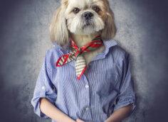 Прикольная фотка на аватарку девушка в мужской рубашке с головой собаки.
