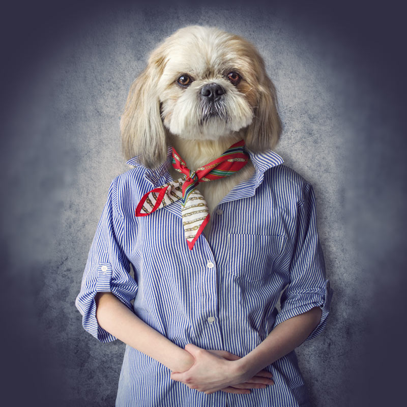 Прикольная фотка девушки в мужской рубашке с головой собаки.