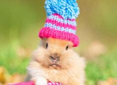 Прикольная фотография на аватарку коричневый кролик в красно-голубой вязаной шапочке.