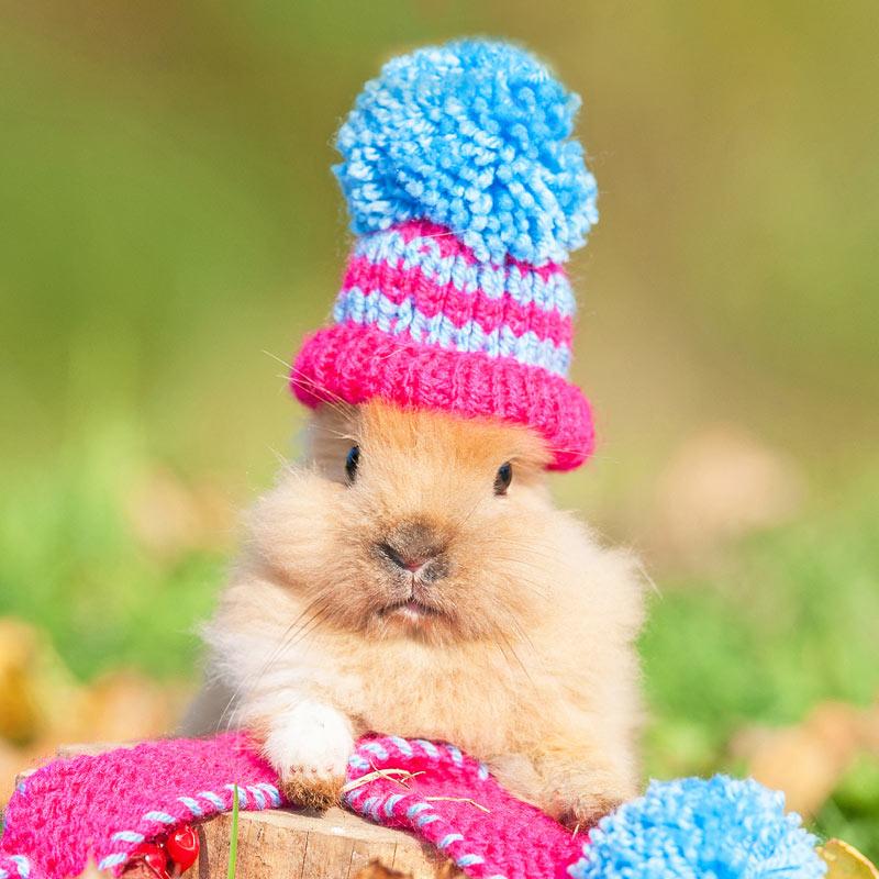 Прикольная фотография кролика в красно-голубой вязаной шапочке.