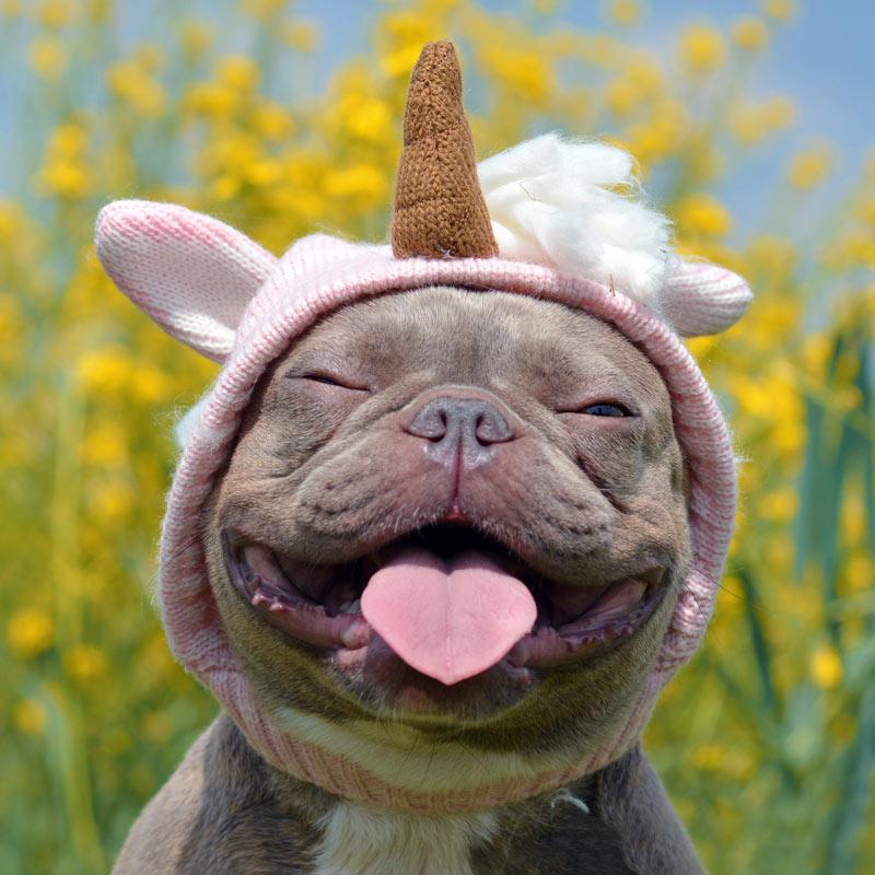 Смешное фото улыбающийся бульдог в детской шапочке на аватарку.