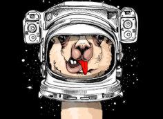 Аватарка с головой ламы в шлеме от космического скафандра на чёрном фоне.