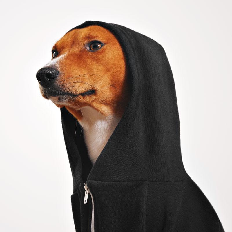 Портретное фото на аву рыжей собаки в в чёрной толстовке с капюшоном.